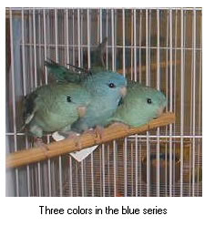 Three colors in the blue series